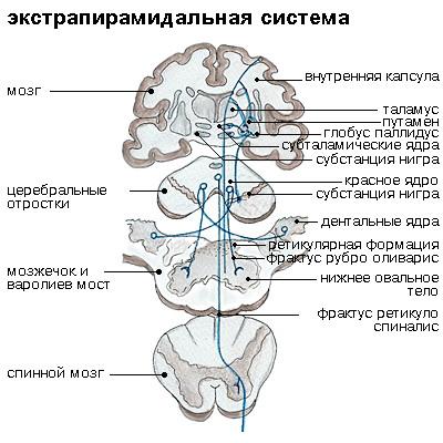 ehkstrapiramidalnaja_sistema
