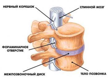 zabolevaniya-spinnogo-mozga